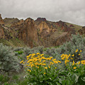 Leslie Gulch Sunflowers by Idaho Scenic Images Linda Lantzy
