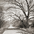 Less Traveled by John Anderson