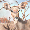 Lesser Kudu by Janae Lehto