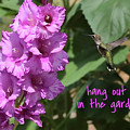 Lessons From Nature - Hang Out In The Garden by Carol Groenen