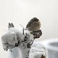 Let It Snow by Bill Hyde
