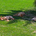 Let Sleeping Dogs Lie by Louise Heusinkveld