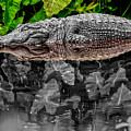 Let Sleeping Gators Lie - Mod by Christopher Holmes