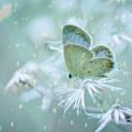 Let The Winter Gone by Setiady Wijaya