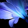 Let Your Light Shine by Krissy Katsimbras
