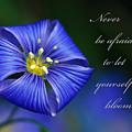 Let Yourself Bloom by Kerri Farley