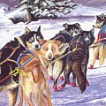 Let's Go Musher by Bob Patterson