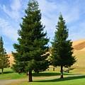 Let's Play Golf 010 by Remegio Dalisay