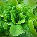 Lettuce by Bri Lou