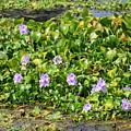 Lettuce Lake Flowers by Carol Groenen