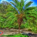 Leu Gardens Palm by SOS Art Gallery