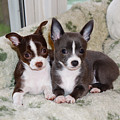 Lexi And Gracie by Ann Keisling