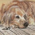 Lexie by Terry Kirkland Cook