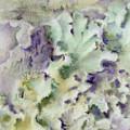 Lichen by Mindy Lighthipe