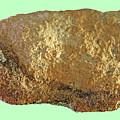 Lichen  On  Rock by Carl Deaville