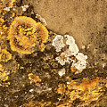 Lichen On The Piran Walls by Stuart Litoff