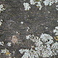 Lichen On Wood by Julie Kindt