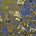 Lichen by Sherri Meyer