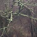 Lichen by Steven Natanson