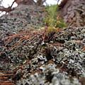 Lichen Tower by Jean Booth