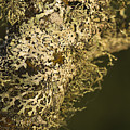 Lichens In Oregon by Robert Potts