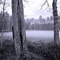 Liesilampi 4 by Jouko Lehto