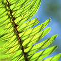 Life Behind The Fern by T Brian Jones