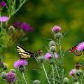 Life In The Meadow by Jenny Gandert