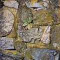 Life In The Wall by Karen Silvestri