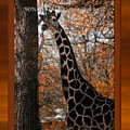 Life Is Standing Tall by Thomas Woolworth