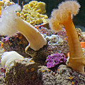 Life Under The Sea In Monterey Aquarium-california by Ruth Hager