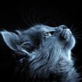 Lift Me Up Cat Art by Isabella Howard