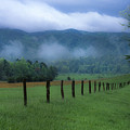 Lifting Fog In Cades Cove by Sandra Bronstein