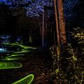 Lighit Painted Forest Scene by Sven Brogren