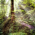 Light Along The Trail by Debra and Dave Vanderlaan