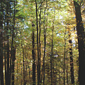 Light Among The Trees Vertical by Felipe Adan Lerma