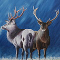 Light And Dark Stags by Pauline Sharp