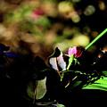 Light And Shadow In The Garden by Karen Majkrzak