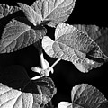 Light And Shadow by Jeannie Burleson