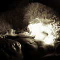 Light As He Tries To Sleep by Cary Leppert