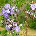 Purple Flowers by Augusta Stylianou
