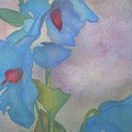 Light Blue Poppies by Jeff Friedman
