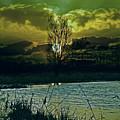 Light-captor by Joachim G Pinkawa
