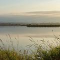 Light Falling Softly On The Marsh by Belinda Greb