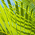 Light Green Palm Leaves by Mary Van de Ven - Printscapes