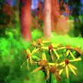Light In  The Forest by Jo-Anne Gazo-McKim