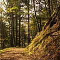 Light In The Woods by Mirko Chianucci