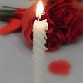 Light My Rose by Ruthanne McCann