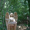 Light On The Angel In My Backyard by Beebe  Barksdale-Bruner