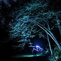 Light Painted Arched Tree  by Sven Brogren